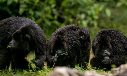 El Parque Xcaret trabaja para la protección de la naturaleza